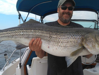 Holy Cow a 38lb 10oz Striper today plus a 23lber and Blues to 10lbs