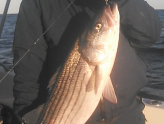 Great jigging action again 8 Keepers to 34in.Good Blackfish action with a couple of Keepers
