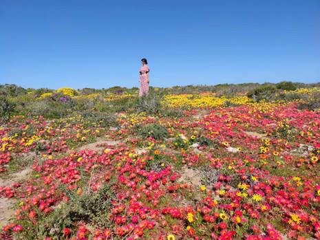 Auf Blumensafari an der Westküste Südafrikas