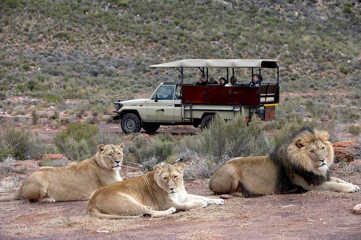 BIG 5 Safari in der Nähe von Kapstadt