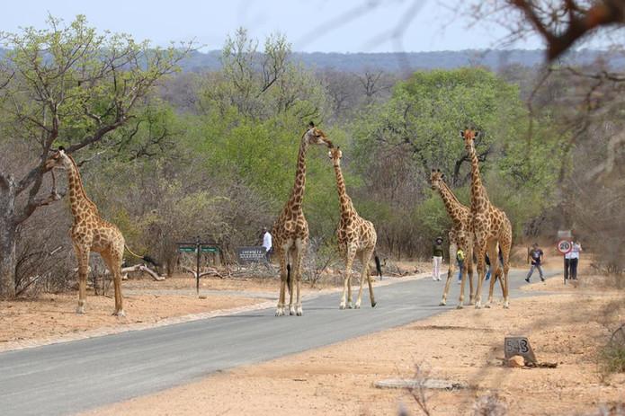 Rundreise durch Südafrika