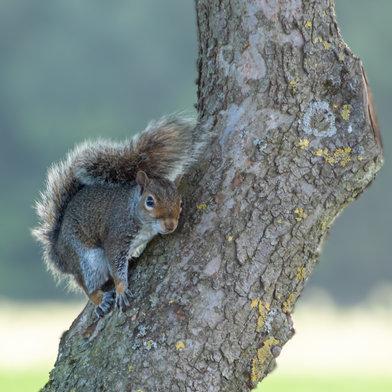 My Resident Squirrel