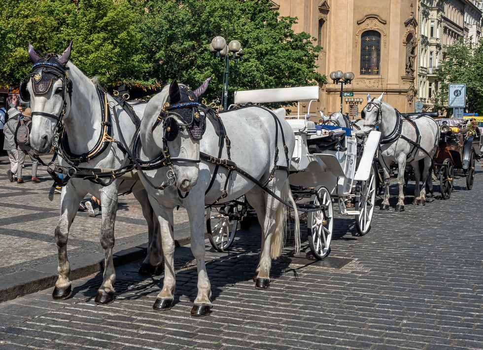 Prague Horse and Carriage