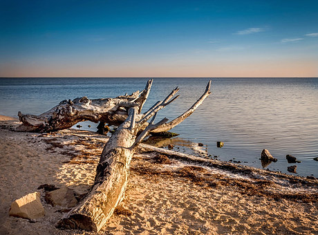 Driftwood on Metung Beach