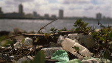 Plastic Epidemic, pt. 2