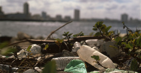 How Plastic Turns into Toxic