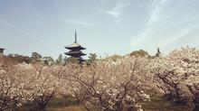 ブゾーニ京都公演のご案内(毎日新聞)