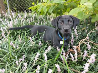 Meet Molly at DITR!