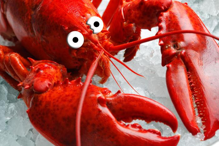 Lobster picture.jpg