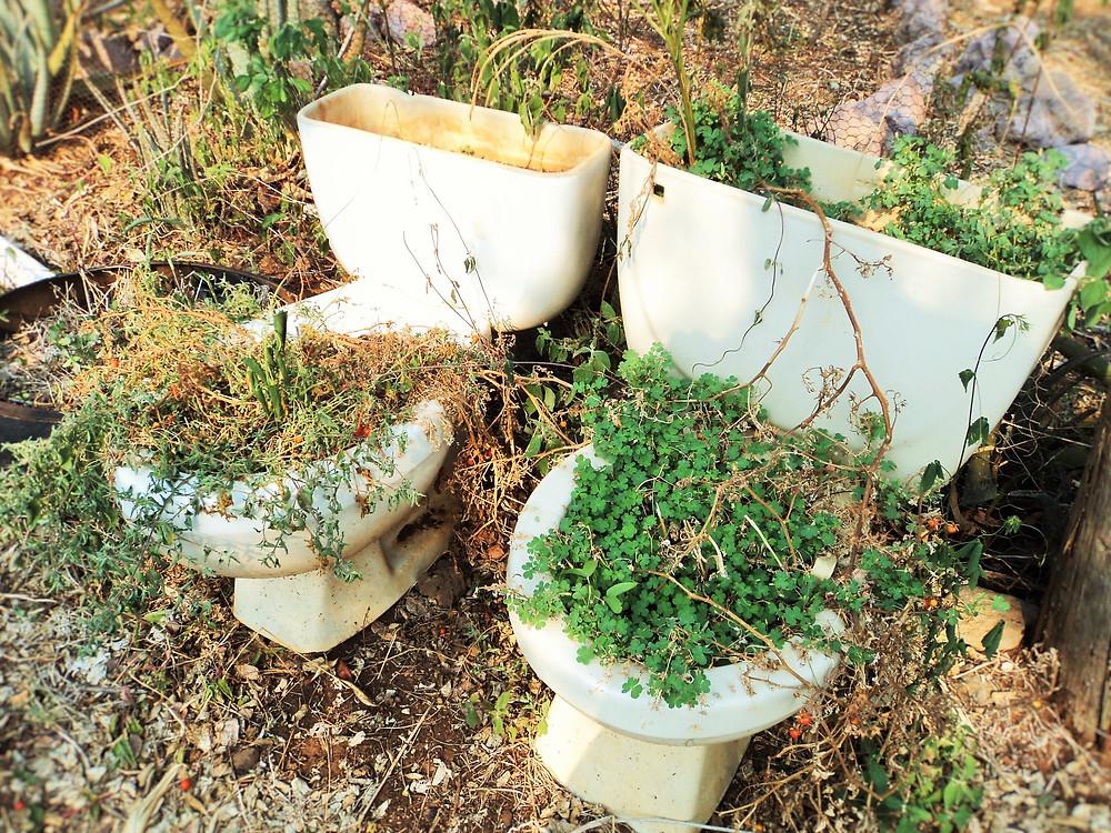 Dois sanitários WC utilizados como vaso de plantas