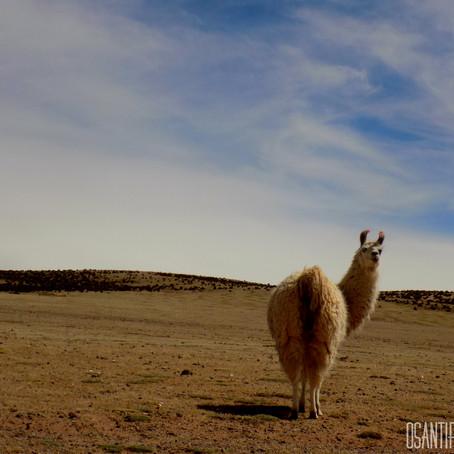 Primeiros dias e quilômetros na Bolívia