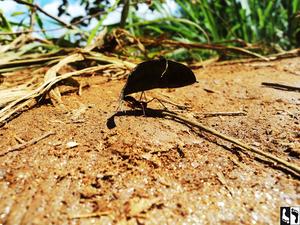 As formigas são as jardineiras naturais, pois realizam a poda das plantas que não estão desempenhando bem seu papel no ecossistema. Se seu pé de laranja está sendo cortado pelas formigas, é porque a planta não está num local adequado.