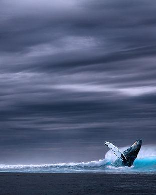 ocean-2051760_1920.jpg