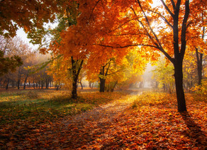 The leaves are falling. The season is changing. Fall is upon us.