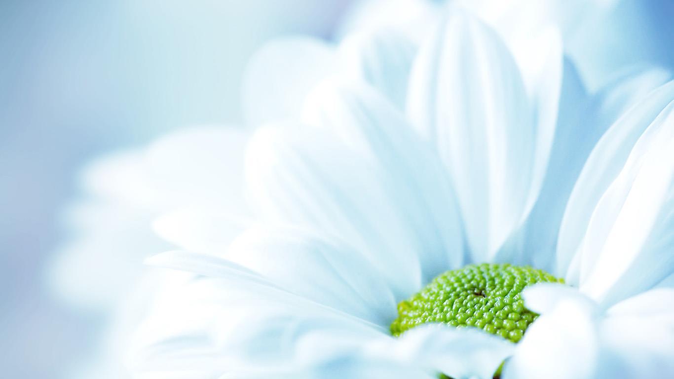 belles-fleurs_fonds-ecran_07