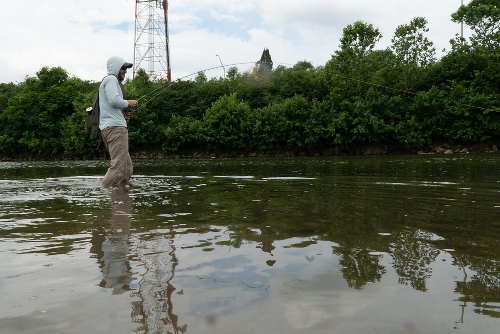 Urban carp fly fishing
