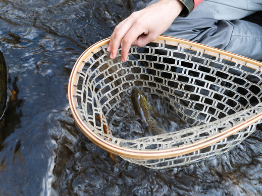 Where to Fly Fish for Trout in Rivers: Explore the Riffles