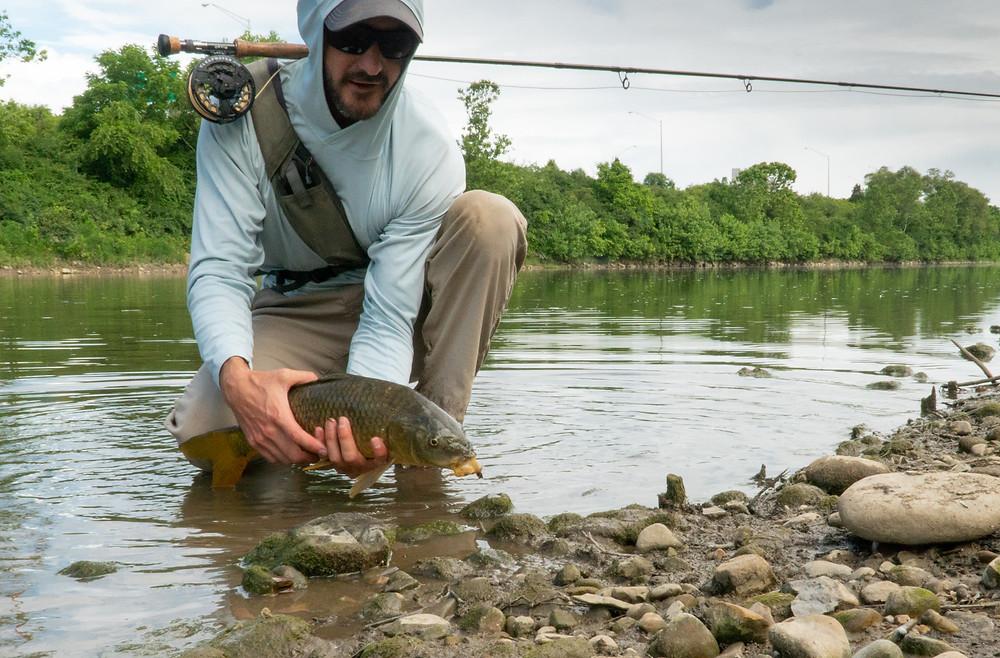 Urban Fly Fishing for Carp