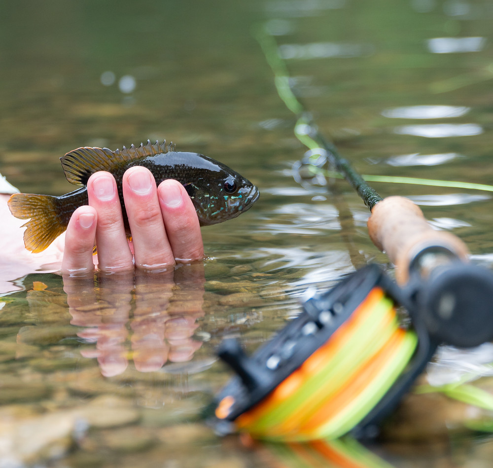 How to be a fly fishing steward