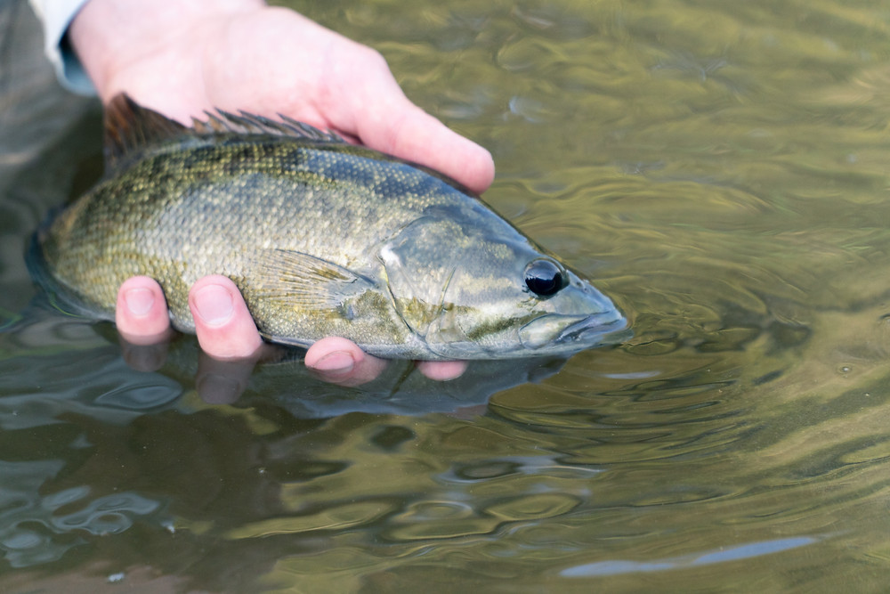 Urban Fly Fishing for Smallmouth Bass