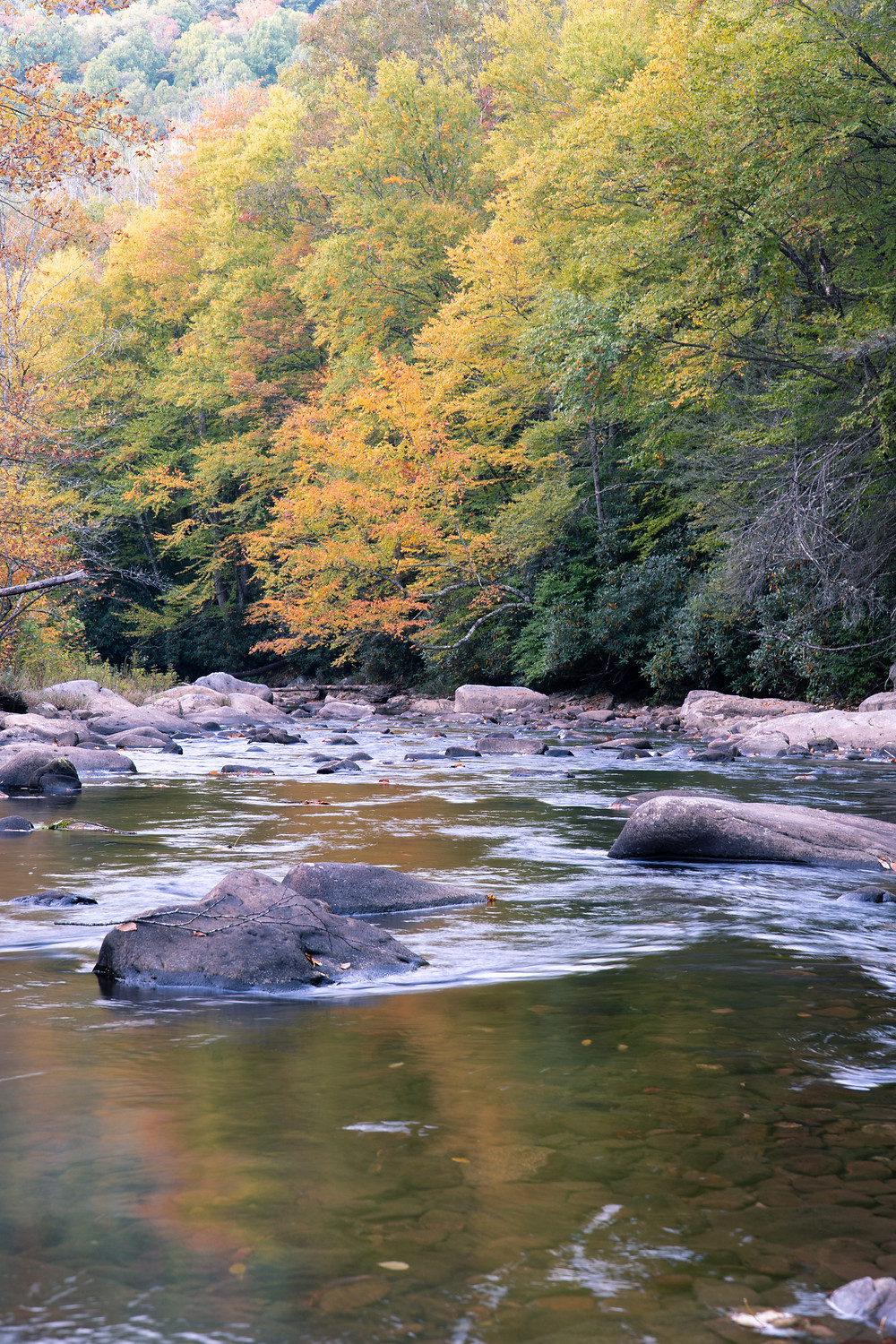 Fly fishing the Cranberry River Backcountry