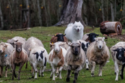 Herding-TB1
