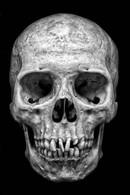 'Skull' by William Allen ( 12 marks )