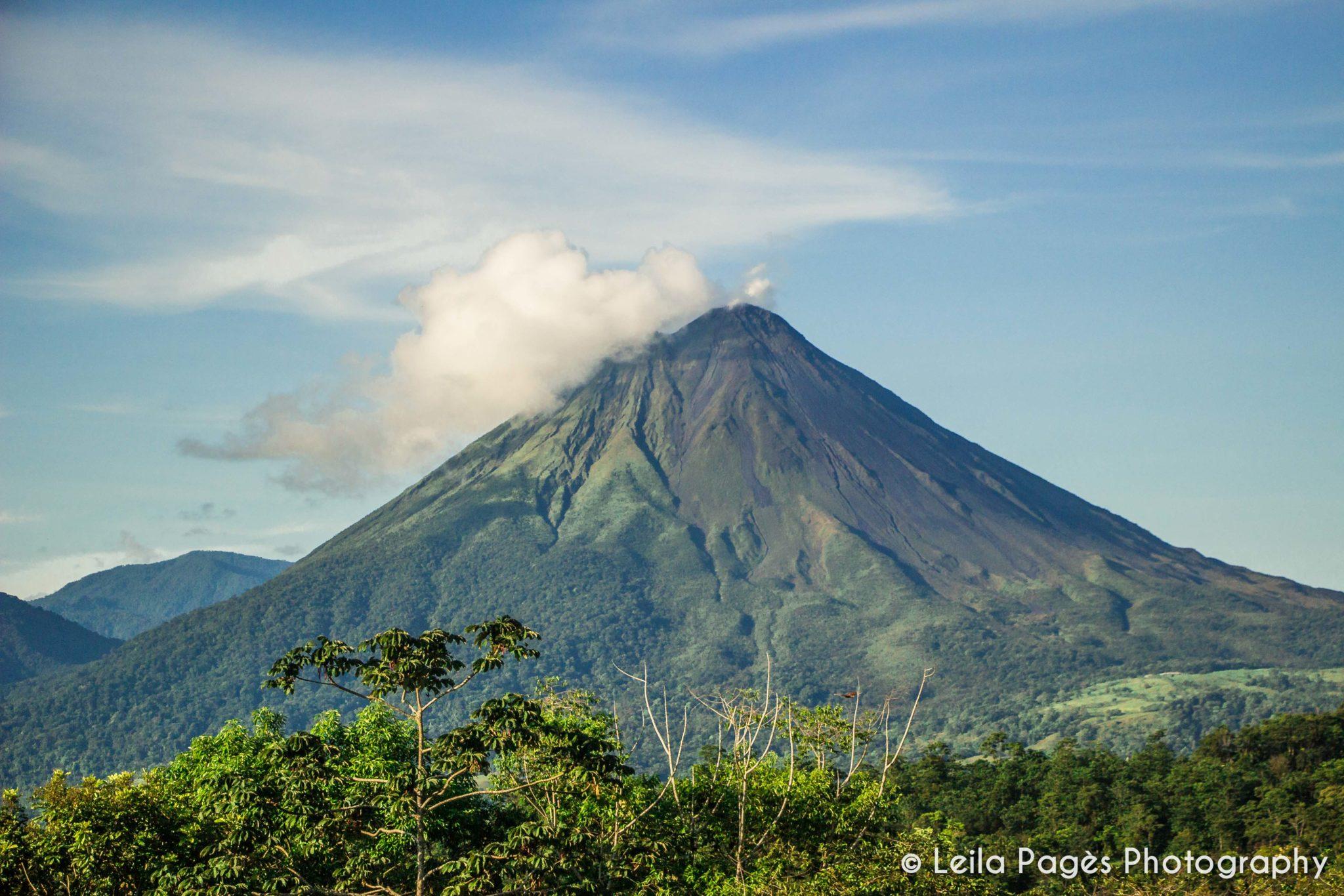 LeavesLizards_Volcano-3-2