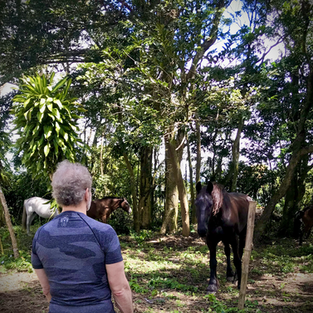 We are all connected and affect each other – practice this with horses
