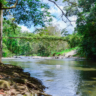 Leaves&Lizards_River picture-1 copy.jpg