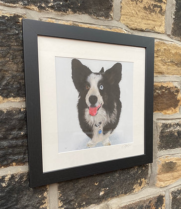 Framed print of a Corgi