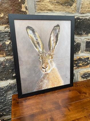 Framed print of Hare - medium