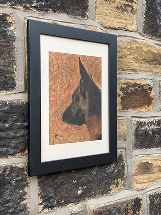 Framed print of German Shepherd