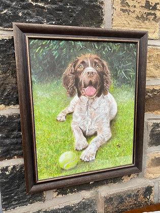 Framed print of Springer Spaniel with ball