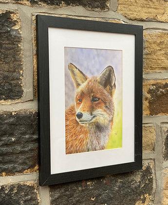 Framed print of Fox