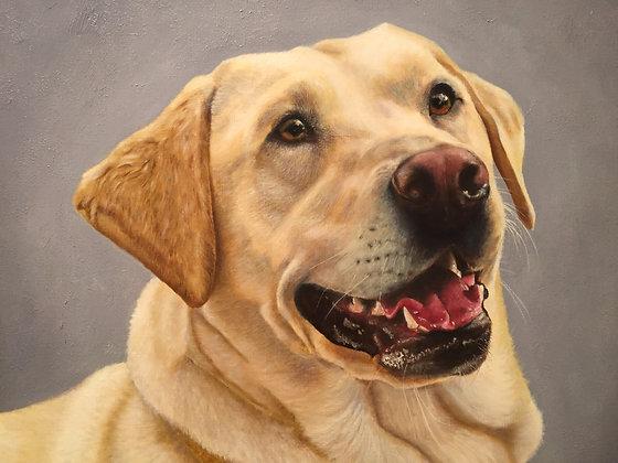 Sandy the Labrador