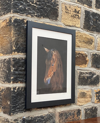 Framed print of young Bay Horse