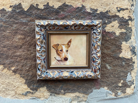 Framed print of Jack Russell - small