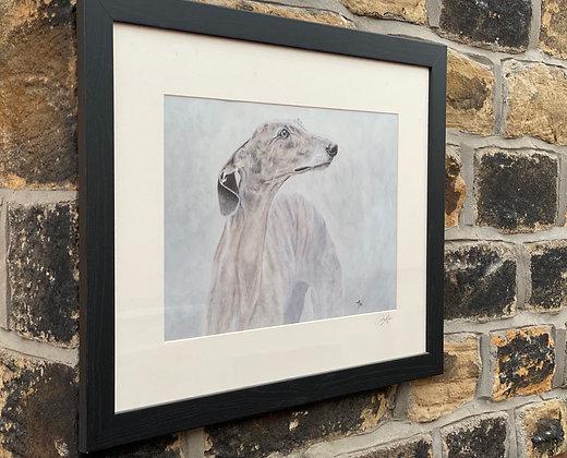 Framed print of Greyhound