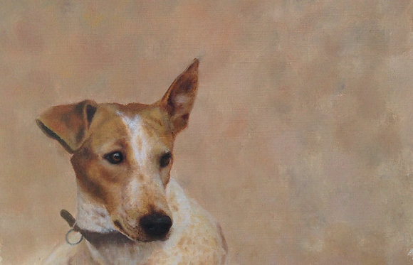 Toby the Jack Russell