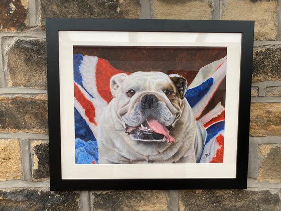 Framed print of Bulldog
