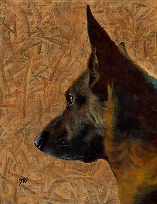 Louis the German Shepherd
