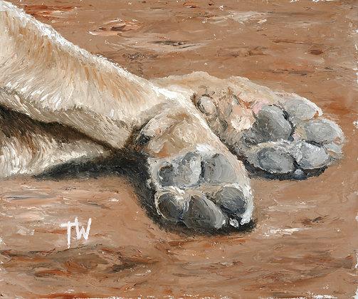 Sleepy Dog Paws