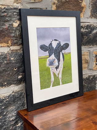 Framed print of Fresian Cow