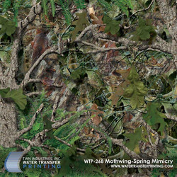 WTP-268-Mothwing-Spring-Mimicry.jpg