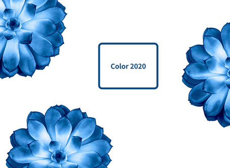 Once Upon A Thursday: Color Palette