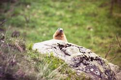 Marmotte à Prapic 05
