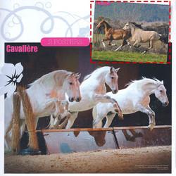 Poster - cavalière magazine