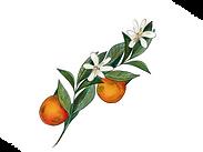 Orange Flower Blossom.png