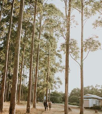 resized trees.jpg